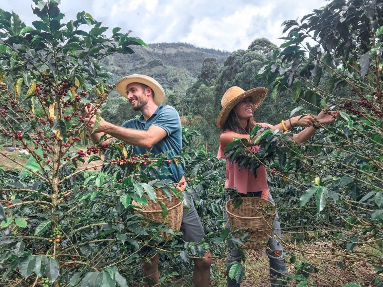 How to make the best coffee in a French press. Farming the best coffee in Colombia's coffee region.
